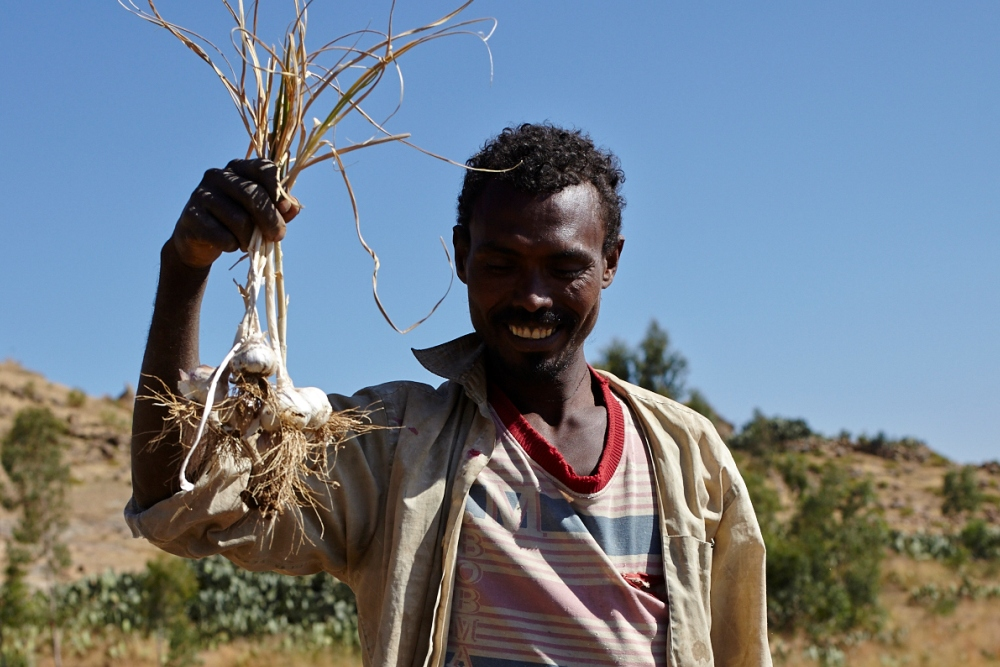 Model farmstead owner, Tesfu, with the first garlic of the season (Photo ©R.Bellamy)
